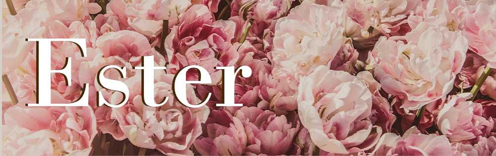 4 lições do livro de Ester para aqueles que querem agir