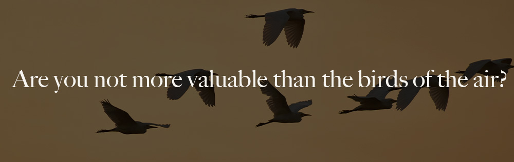 Are you not more valuable than the birds of the air?
